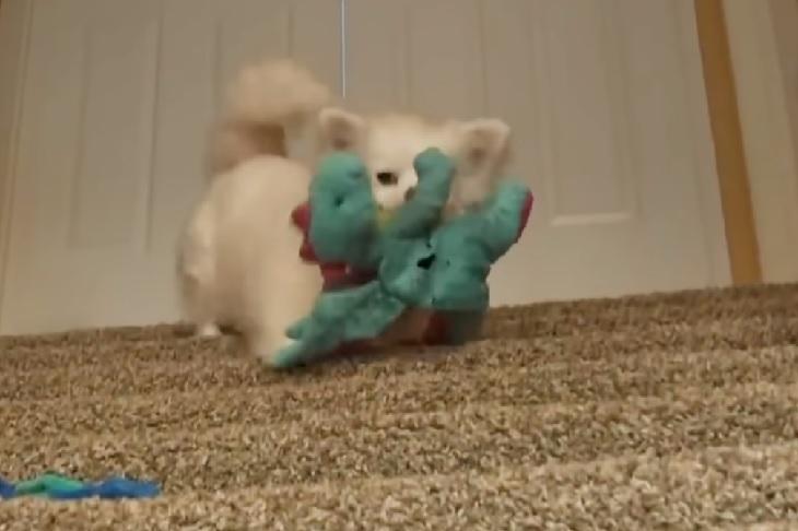 debby cucciola gioca con pupazzi