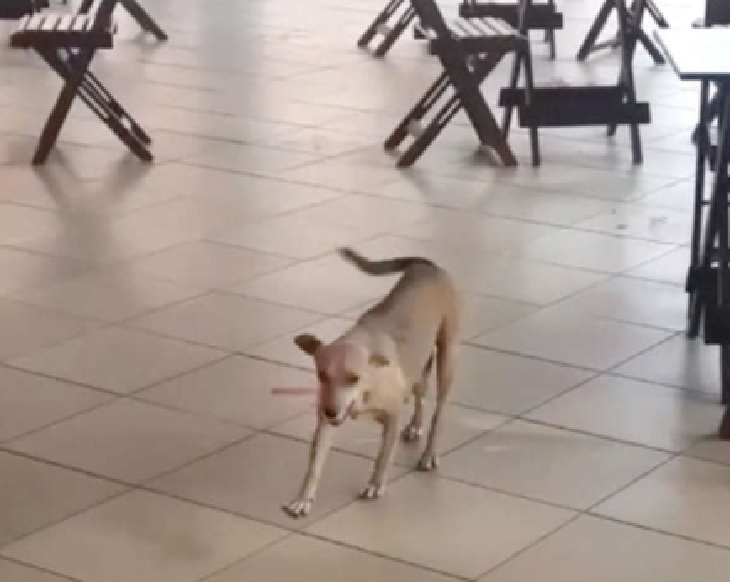 deneres cane felice riapertura locale