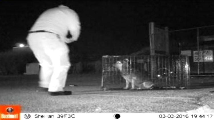 Dopo due anni di smarrimento, il cagnolino Bosco ritrova il suo proprietario (VIDEO)