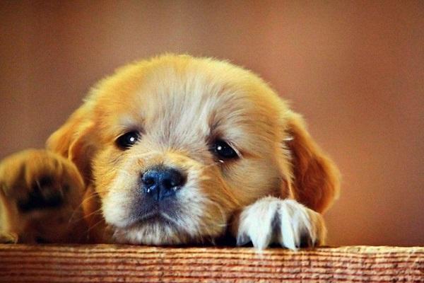 cucciolo di cane tenero