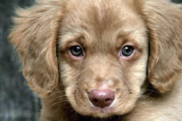cane con lo sguardo triste