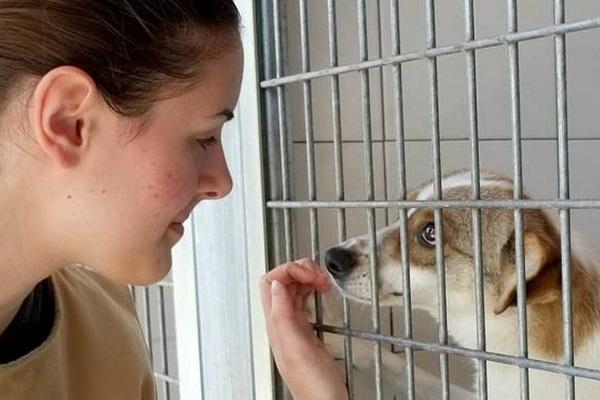 cane e ragazza in canile