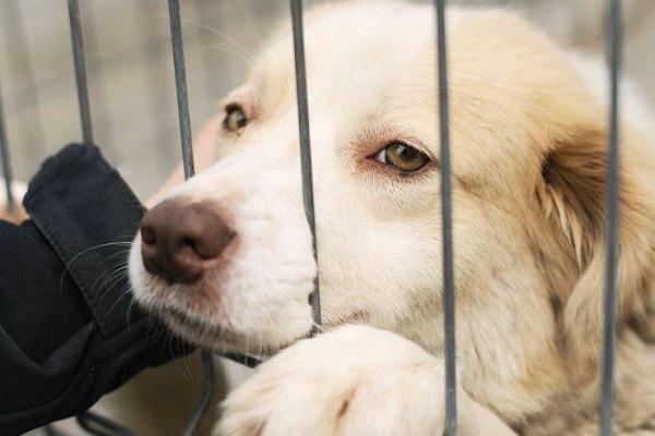 cane dentro un recinto