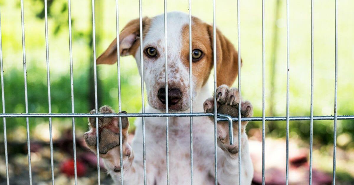 cane meticcio in gabbia