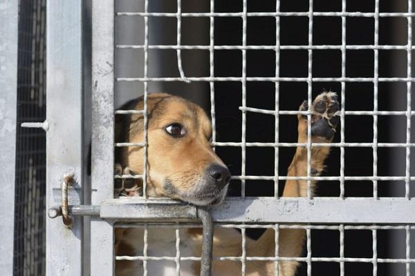 cane guarda fuori dal box