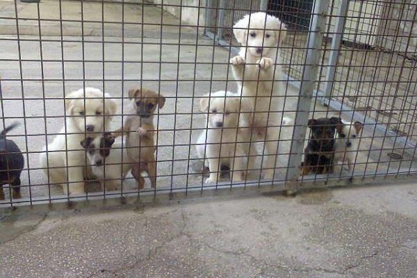 diversi cani in gabbia