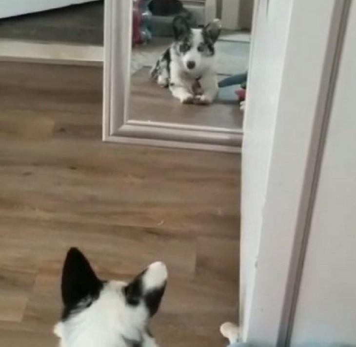 freyja cane non capisce riflesso