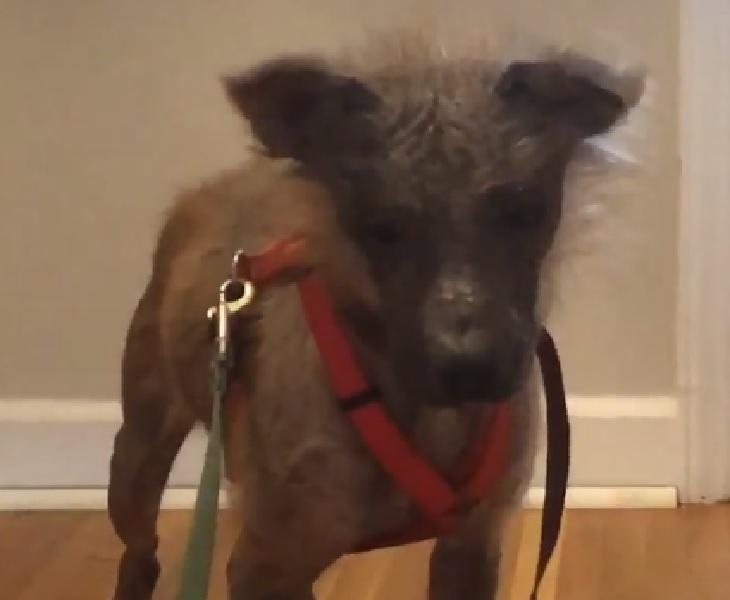 griff cane mamma temporanea