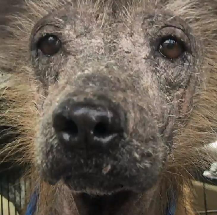 Griff, il cane che non smetteva di tremare adesso ama la vita (VIDEO)