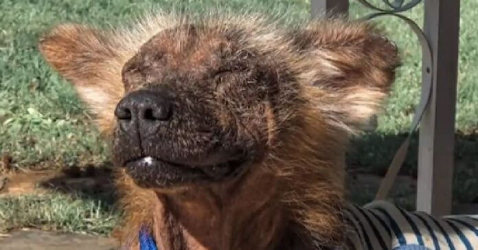 griff cane che non smetteva di tremare adesso felice