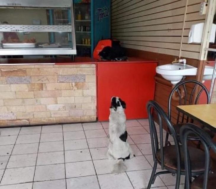 haward cane raggiunge ristorante