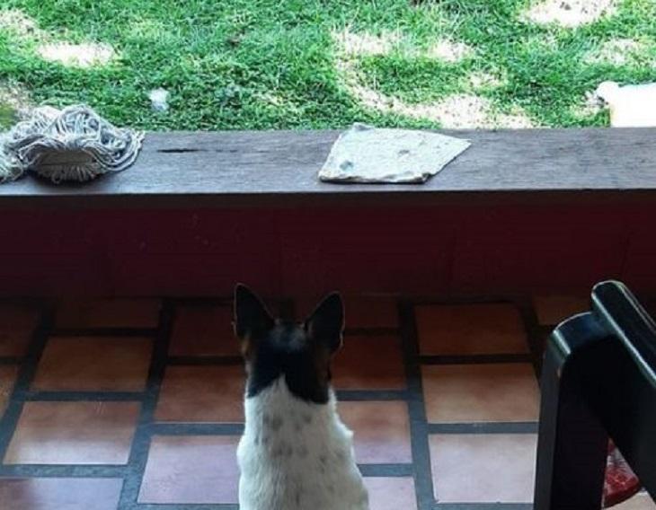haward cane proprietario ipotesi uomo