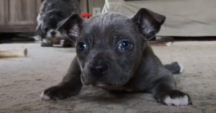 hugo cucciolo sogna di camminare prima o poi