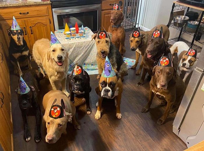 cuccioli festa compleanno