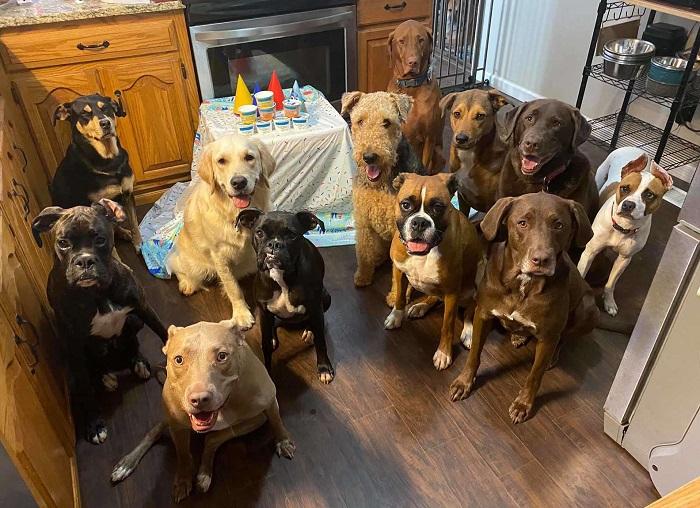 lending paws pet care foto