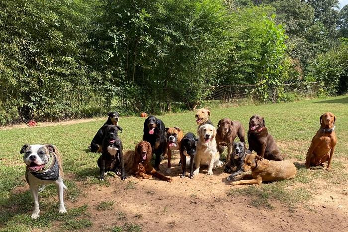 cuccioli associazione gruppo