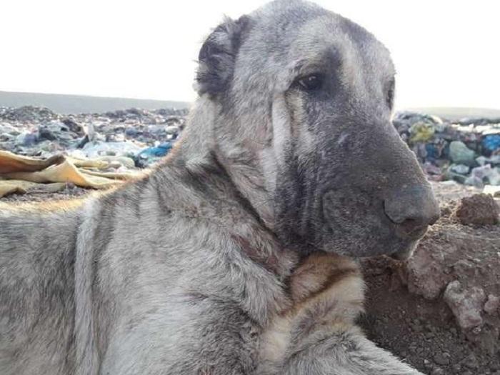 cucciolo discarica salvato