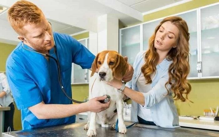 Il cagnolino randagio Guardian non vuole fare il vaccino e scappa (FOTO)
