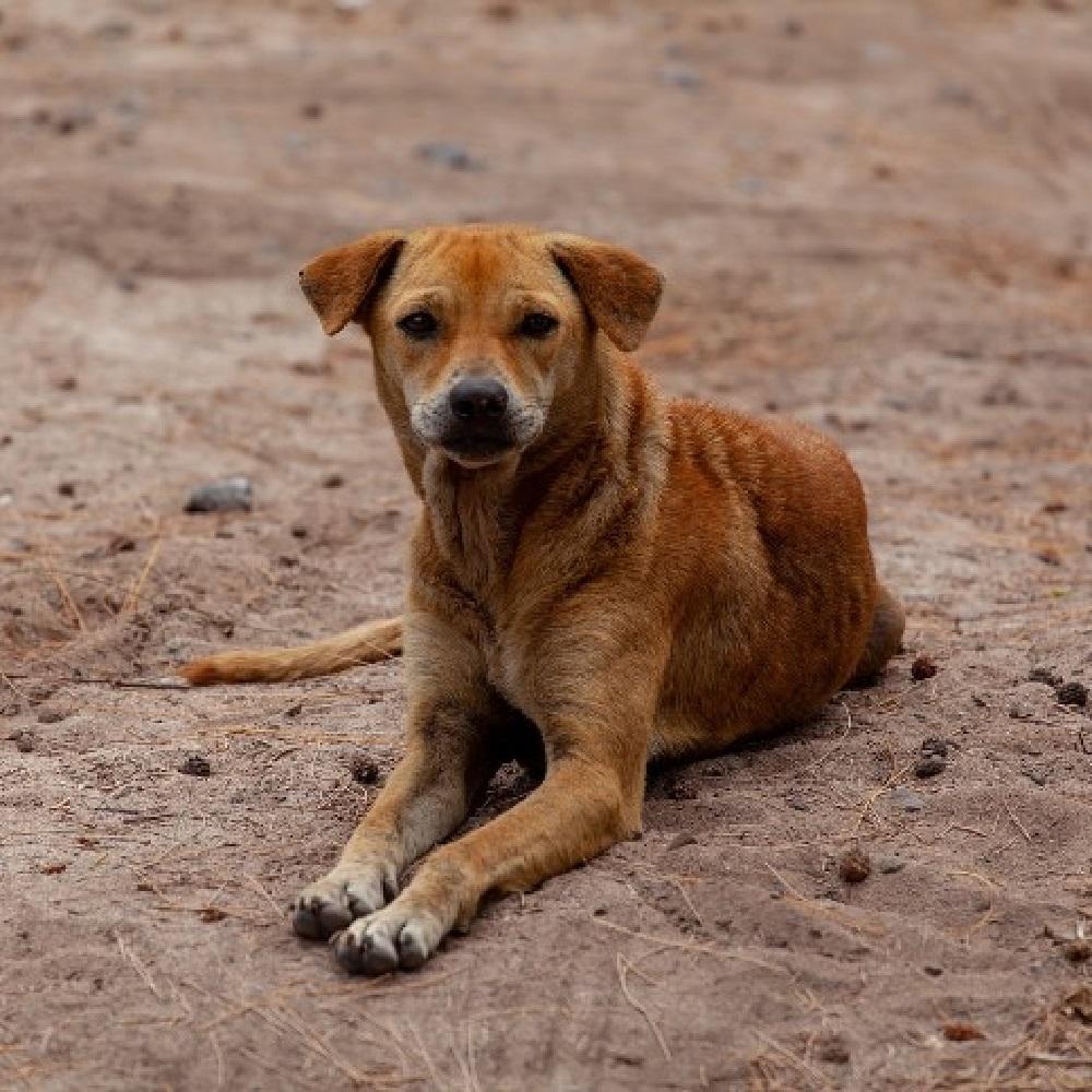 quilca cucciolo randagio salvato