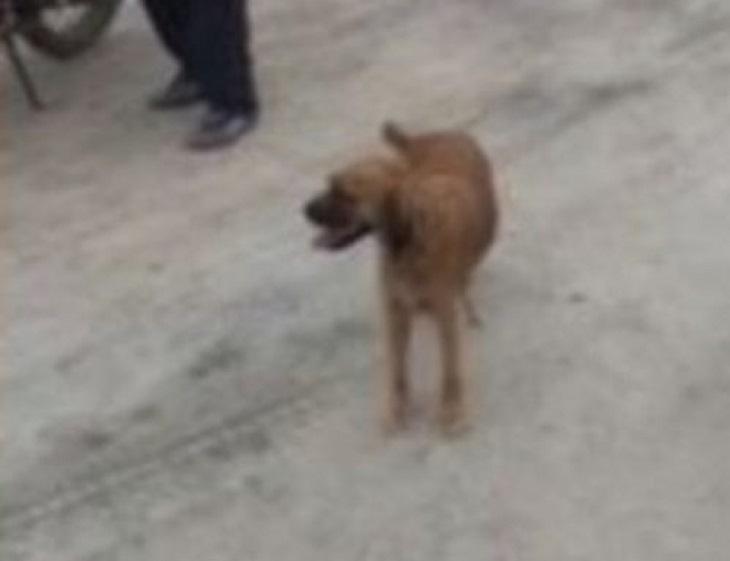 quilca cane caduta 15 metri