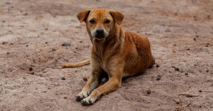 salvataggio cane randagio caduto scogliera