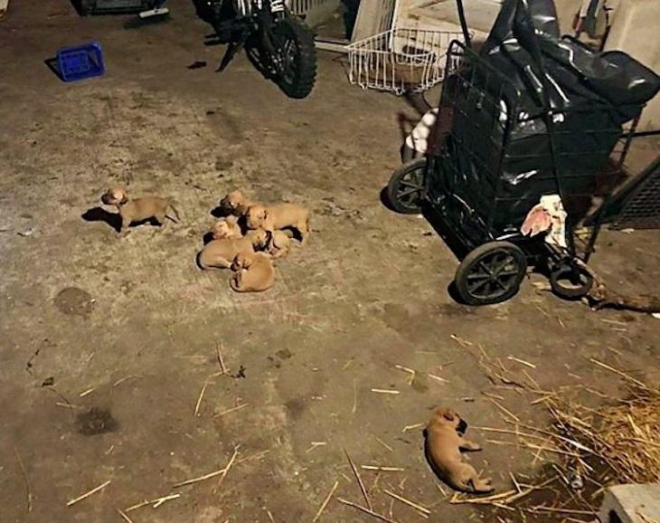 Il salvataggio di alcuni cagnolini chiusi all'interno di una stanza (VIDEO)