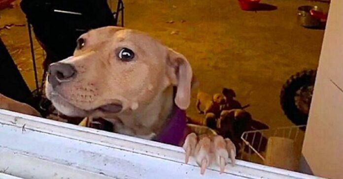 salvataggio alcuni cagnolini chiusi in una stanza