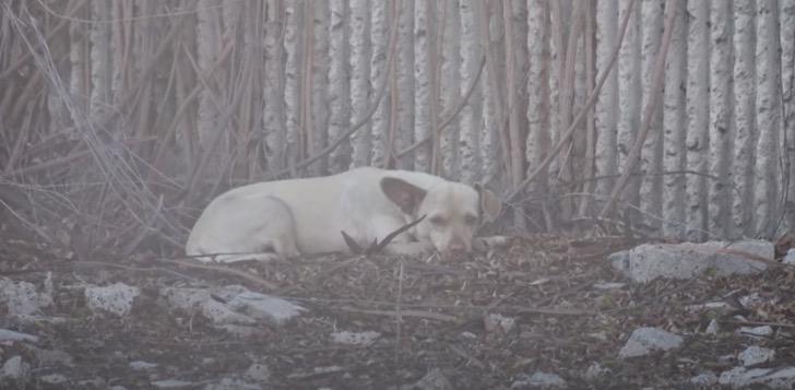 Il salvataggio di Barbie, la chihuahua abbandonata in autostrada (VIDEO)