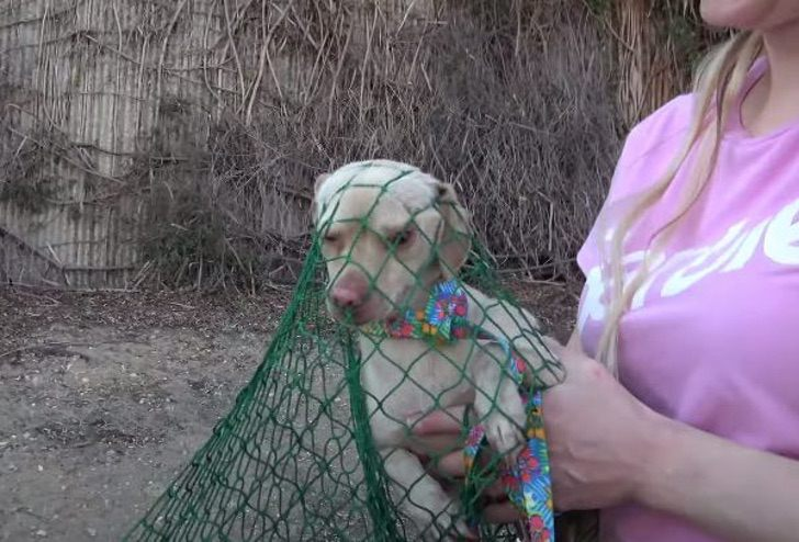 rete salva barbie