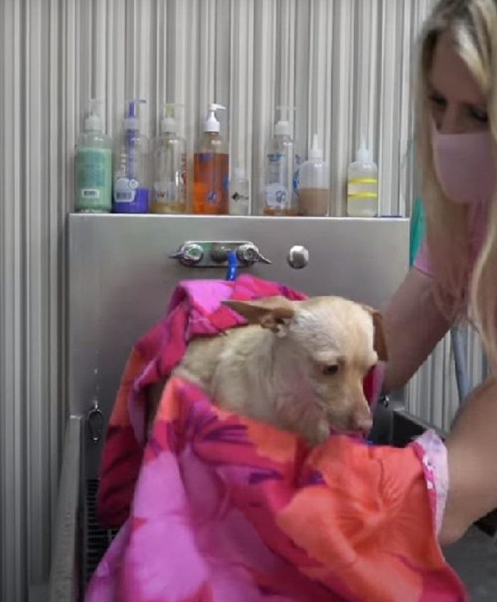 cagnolina assistenza barbie