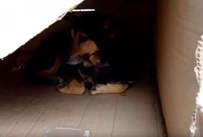 cagnolino scatola cuscino