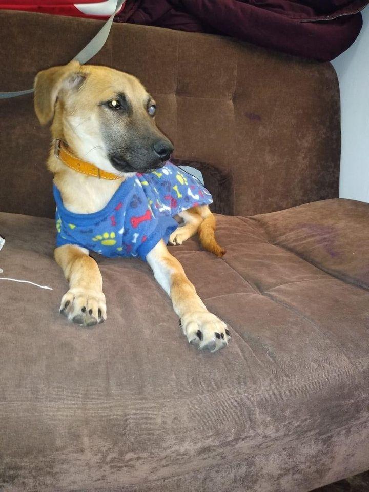 Il salvataggio di Chester, il cagnolino trovato con un biglietto al collo (VIDEO)