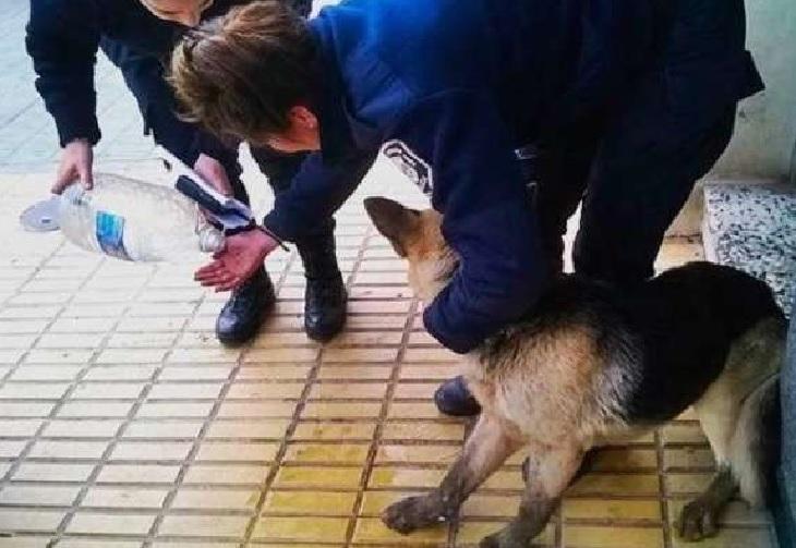Il salvataggio di un cucciolo bloccato in un canale fognario (VIDEO)