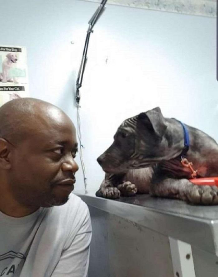 Il salvataggio di Wrinkles, il cagnolino randagio dallo sguardo dolce (FOTO)