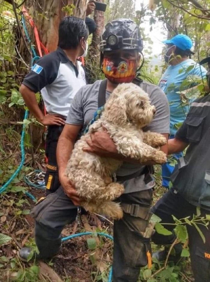 cucciolo guatemala recuperato