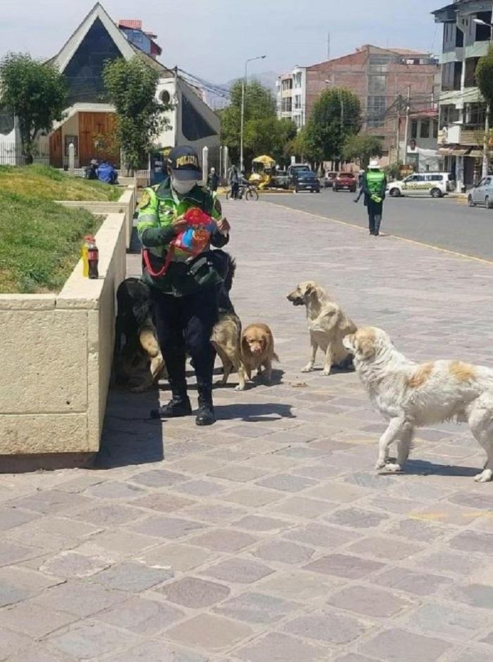 poliziotta cani randagi