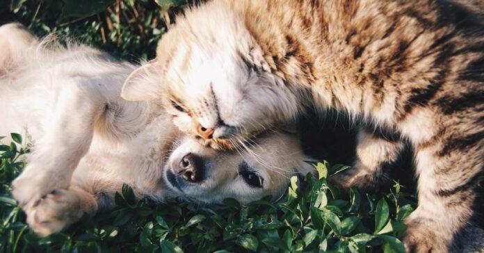 cani possono mangiare l'erba gatta