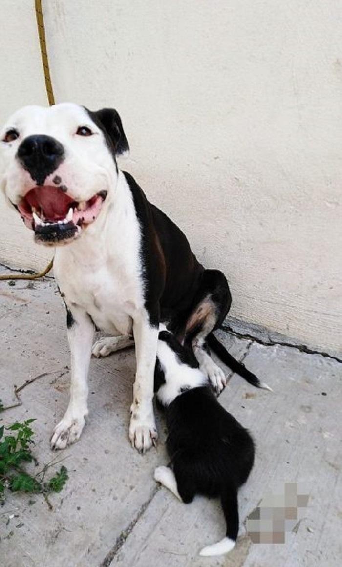 La cagnolina Emi, dopo la perdita dei cuccioli, ora torna a sorridere (FOTO)