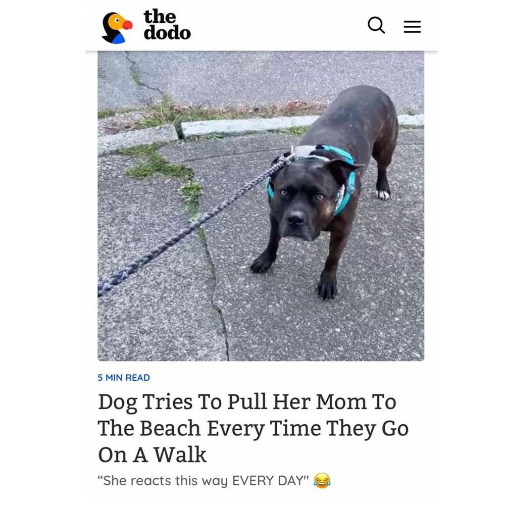 cagnolina mia pitbull