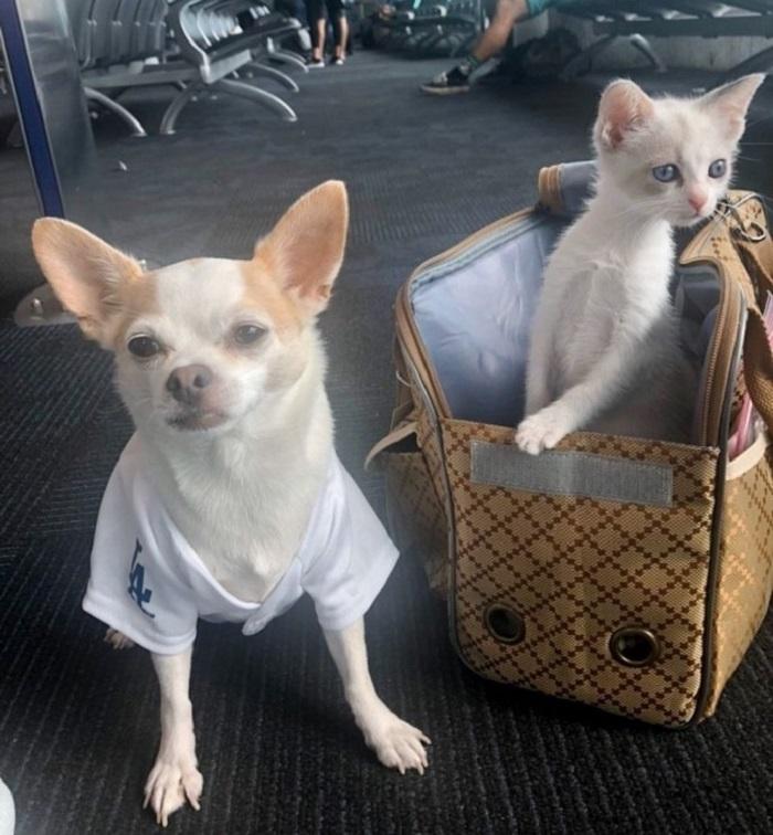 cuccioli viaggio buster