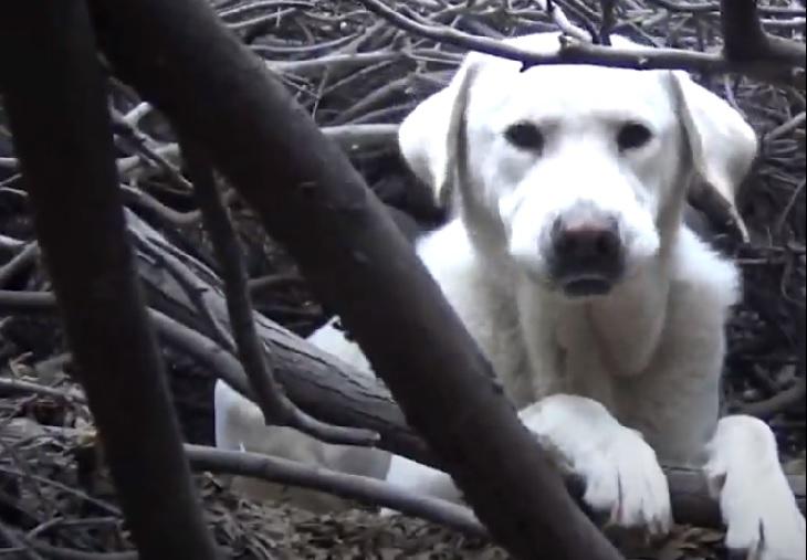 mama cagnolina cuccioli avvistamento