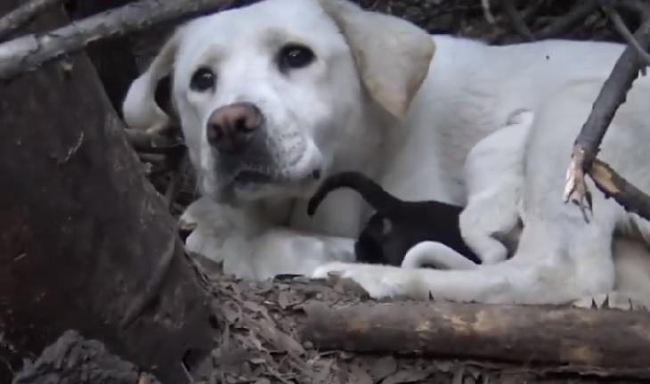 mama cane labrador bianco rami