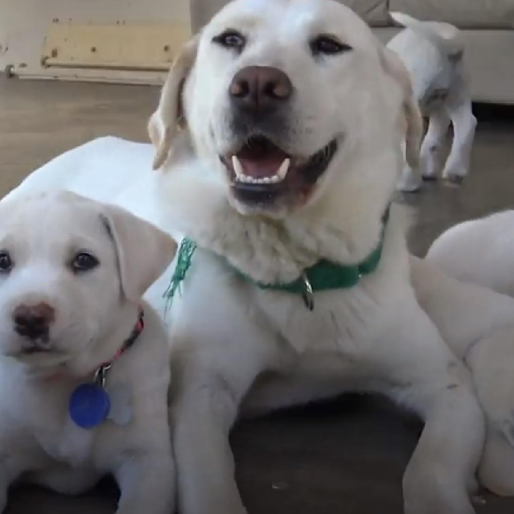 mama cane mamma trova casa