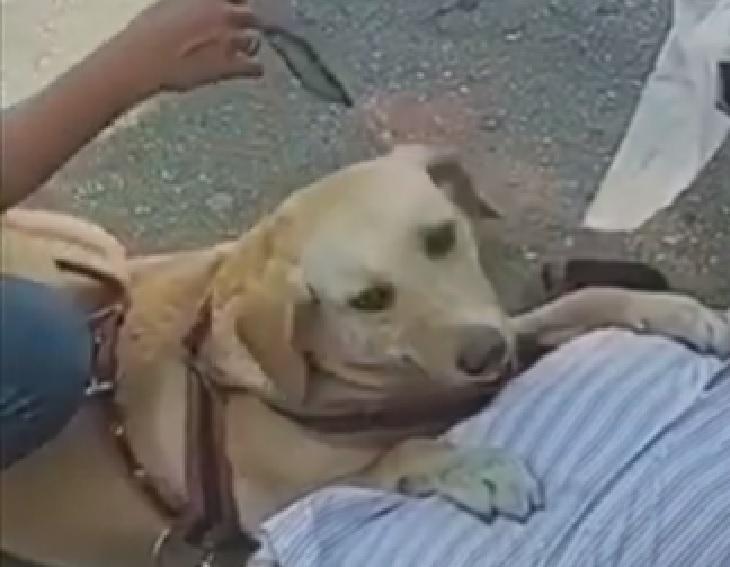 nina cagnolina guida fernando