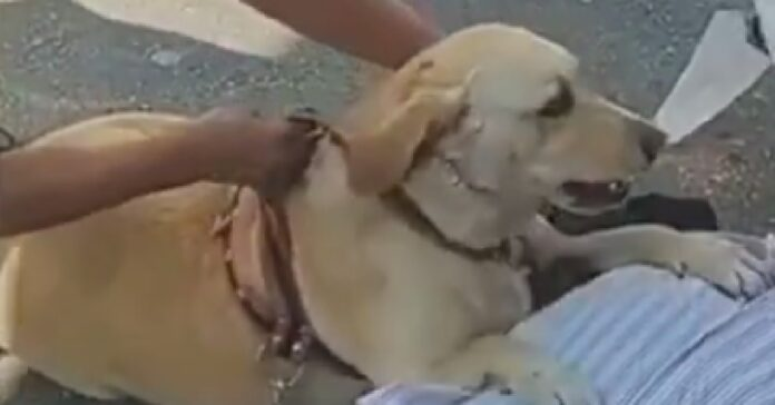 nina cagnolina ha salvato la vita proprietario