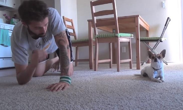 Pancho, il piccolo cucciolo di chihuahua che pratica lo yoga (VIDEO)