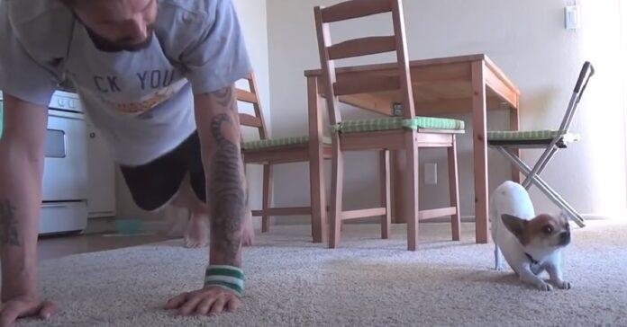 pancho piccolo cucciolo chihuahua pratica yoga