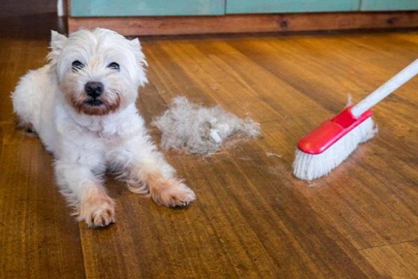 pulizia della casa con il cane