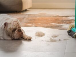 pulizia casa con cane