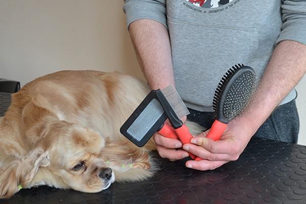 spazzole per cane